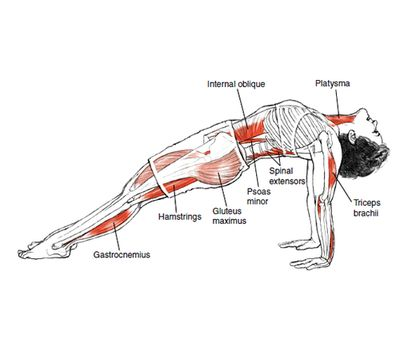 Purvottanasana Upward Plank Pose © Leslie Kaminoff's Yoga Anatomy B E N E F I T S — Strengthens your triceps, wrists, back, and legs ...   Loved and pinned by www.downdogboutique.com