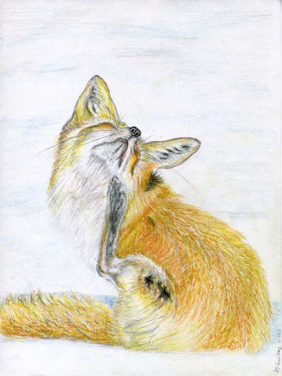 244 Best Images About Colored Pencil Art Fox On