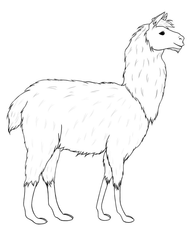 Llama line drawing - Google Search Cute animal clipart