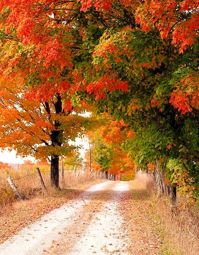 Country road in autumn (Ontario) by Elliot Eskey