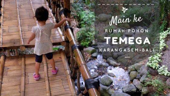 Main ke Rumah Pohon Karangasem Temega