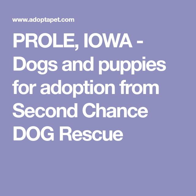 PROLE, IOWA - Dogs and puppies for adoption from Second Chance DOG Rescue