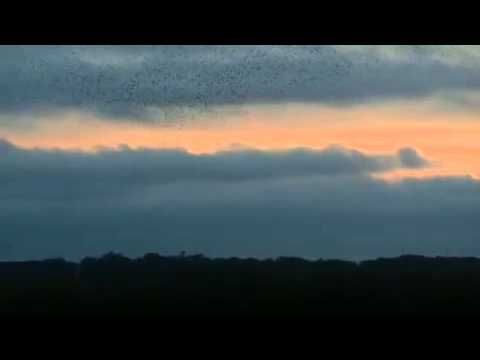 Swallow migration: poetry in motion - YouTube