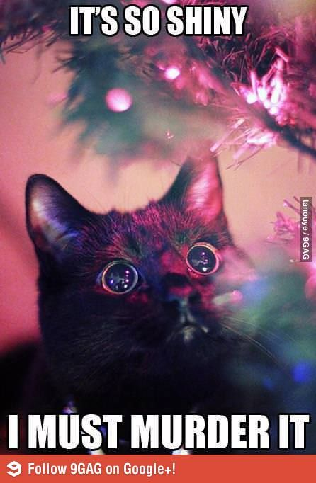 It's so shiny. Pretty sure this is what my cat thinks 90% of the time.