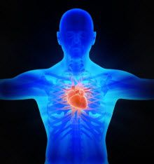 Nitric Oxide Is Critical to Cardiovascular Health