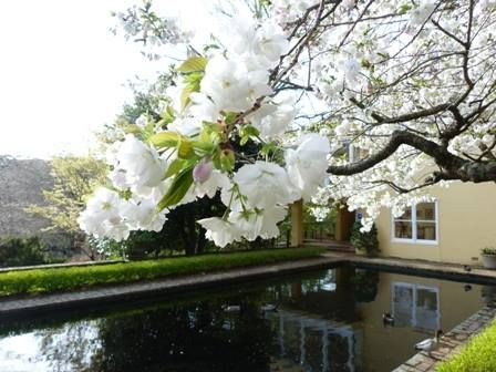 Everglades- Australia's most spectacular garden for all seasons in Leura