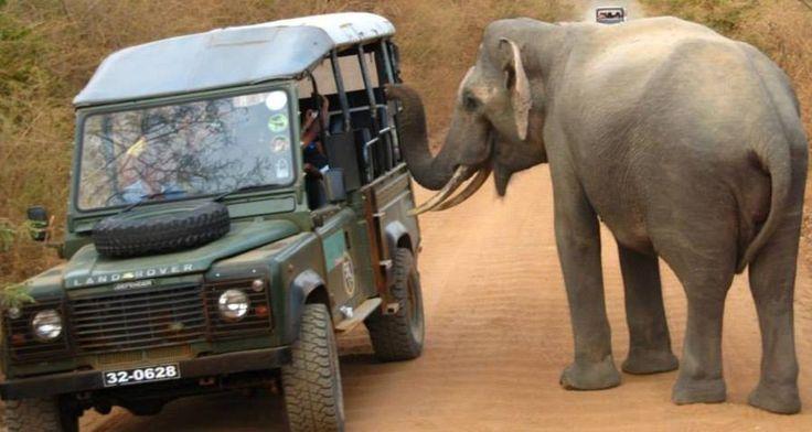 Safari - Sri Lanka - http://www.travelmoodz.com/en/travel-professional/raja-ranasinghe