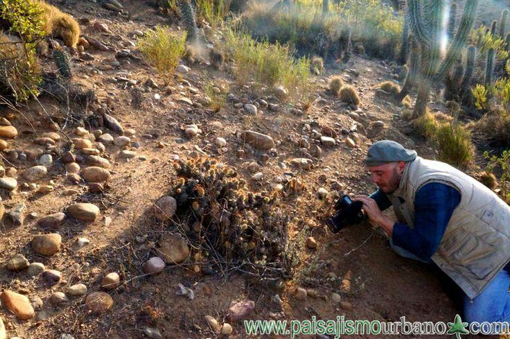 Ignacio Solano, fotografiando Cumulopuntia boliviana. — en Chile, La Serena.