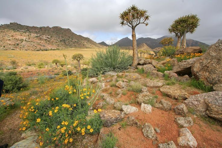 Namaqualand, le désert fleuri d'Afrique du Sud