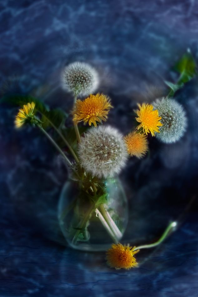 Dream about dandelions that you gave me ….  by Елена Брежицкая