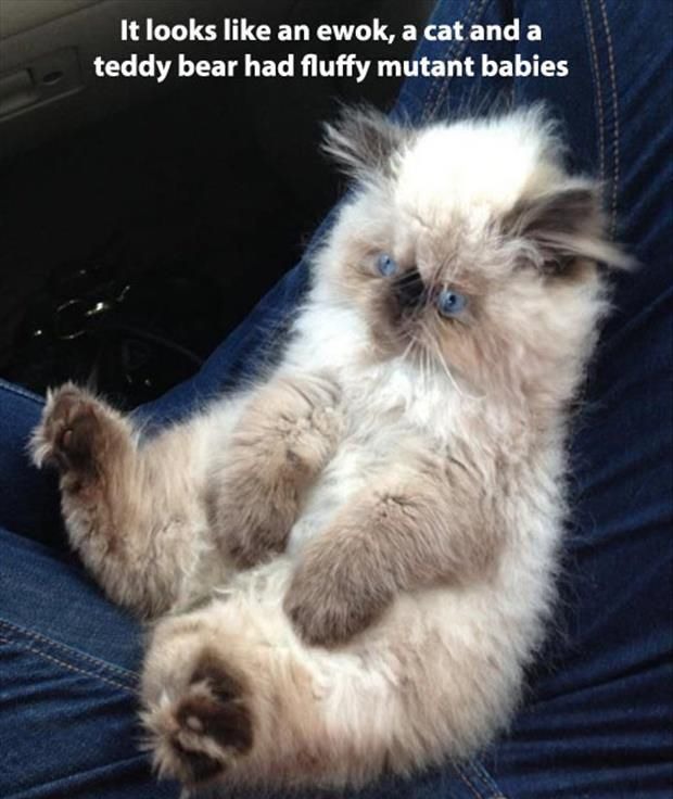 Dump A Day Attack Of The Funny Animals - 110 Pics