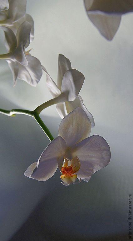 """Купить композиция """"белые орхидеи"""" - орхидеи, орхидея фаленопсис, цветы ручной работы, керамическая флористика"""