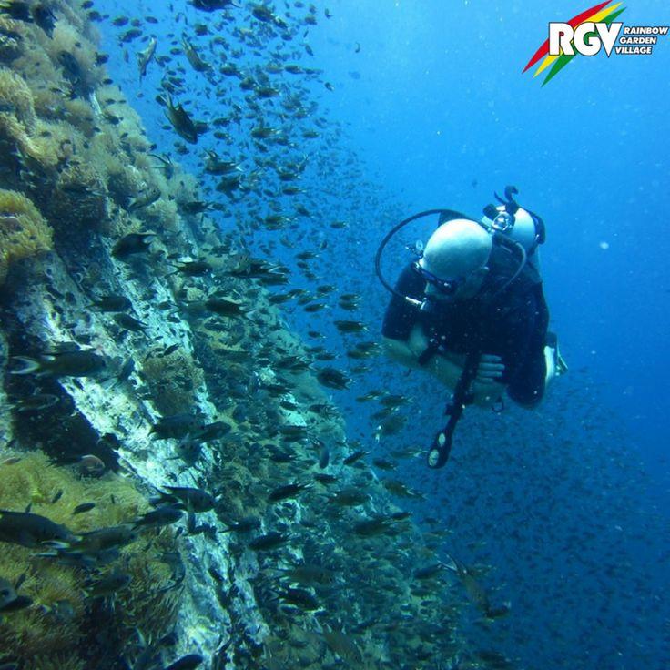 Ein Ort den man gesehen haben muss! Koh Phi Phi ist das Schnorchel- und Taucherparadies in Thailand. Auf der Inselgruppe – nicht weit von unserem RGV Standort in Chumphon - ist jetzt Hochsaison – also auf ins türkiesblaue Wasser!