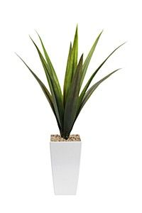 AGAVE IN FLAIR TALL POT