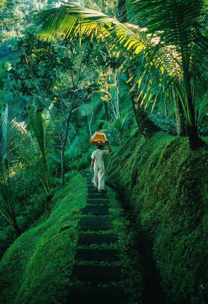 Forest journey. Bali