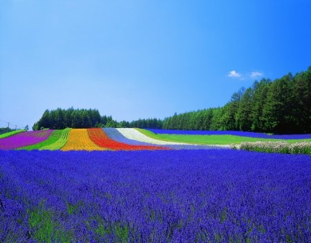 Furano - As beautiful in real life as in photos.