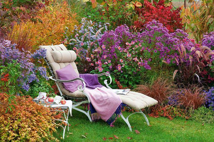 Die Bunte Welt Der Astern Herbstgarten Garten Gartendekor
