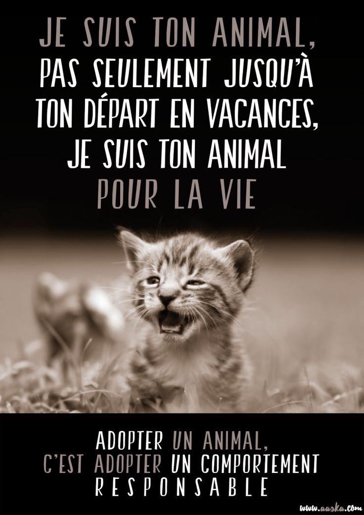 ABANDONS - DÉFENSE CAUSE ANIMALE - 2016