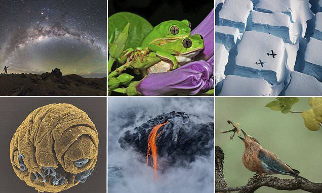 Stunning Royal Society photos showcase nature's beauty
