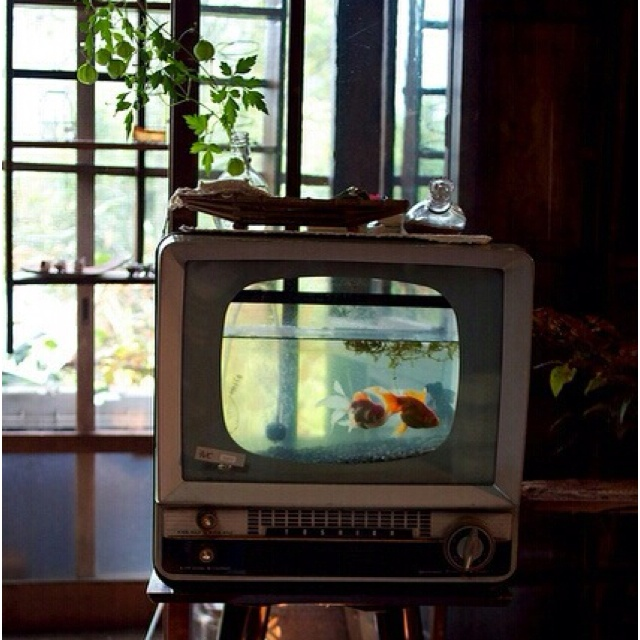 Awesome.  Fish in the tv.