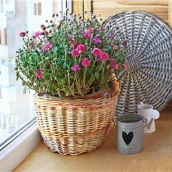 """Τα φυτά που """"καθαρίζουν"""" το σπίτι σας"""