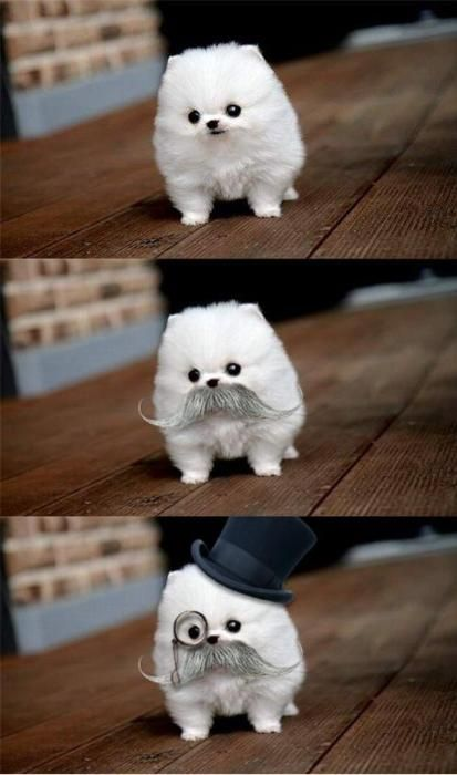 so adorable!!!; but it does look like somebody's got wwwaaaaayyyyyyyyy too much time on their hands...:)