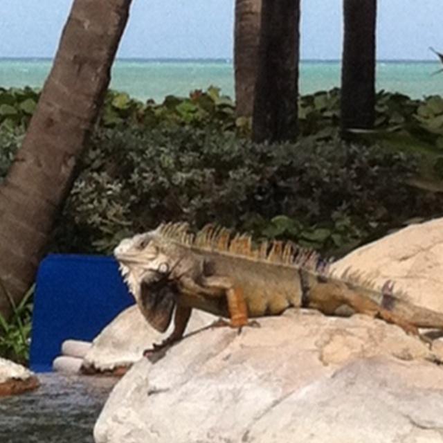 My Little Friend In Puerto Rico