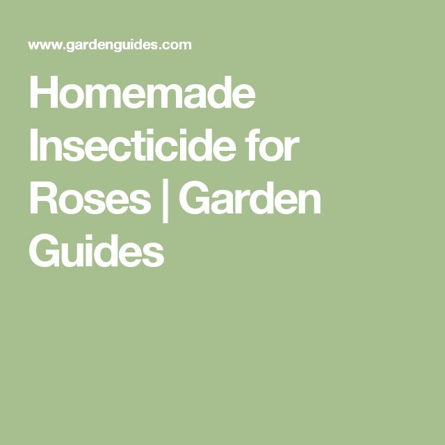 Homemade Insecticide for Roses |  Garden Guides