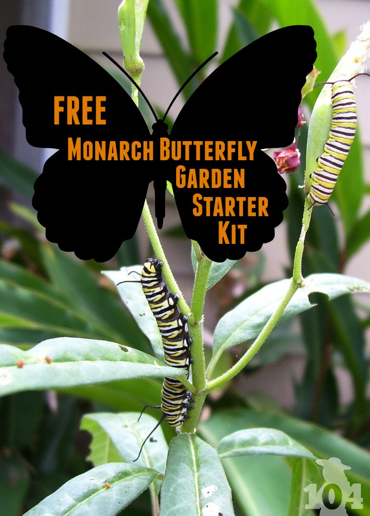 The National Wildlife Federation is offering a free Monarch butterfly garden starter kit to anyone who takes the pledge to help protect and restore the Monarch butterfly population.