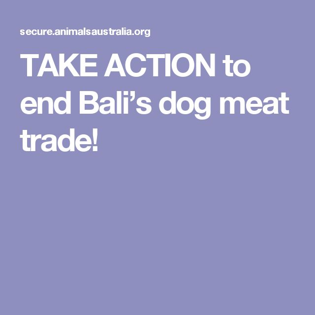 TAKE ACTION to end Bali's dog meat trade!