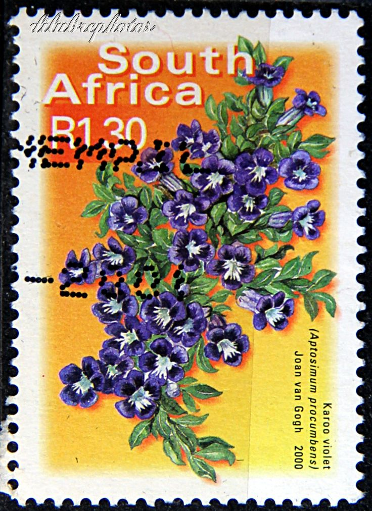 Republic of South Africa. FISH, FLOWERS & BIRDS TYPE OF 2000. KAROO VIOLET. Scott 1202 A384, Issued 2000 Nov 12, Booklet Stamp, Die Cut, Perf. 13 x 12 1/2 on 2 or 3 Sides, Litho. 1.30. /ldb.