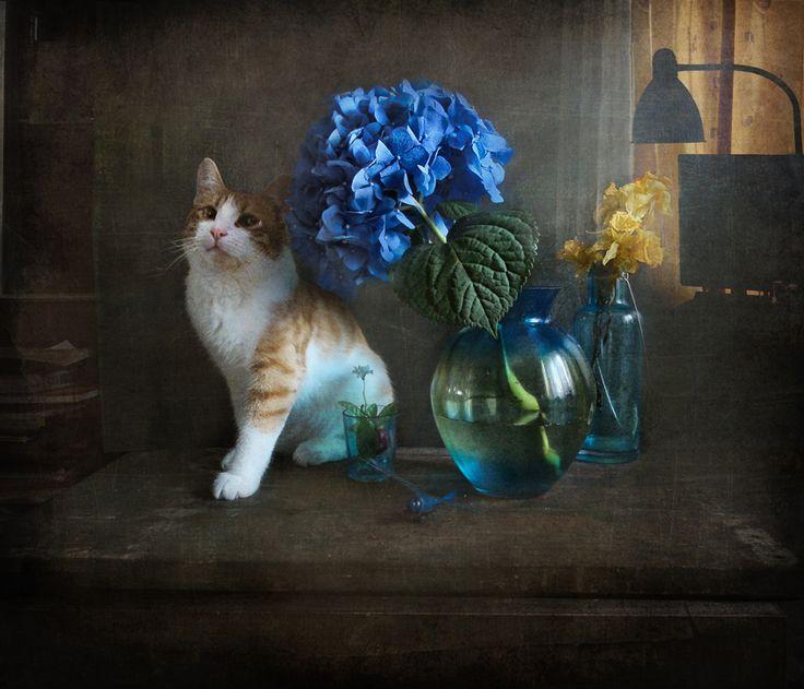 "photo ""***"" tags: still life, nature, tomcat, ваза, цветок"