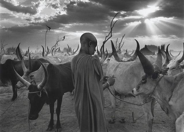 Photo by Sebastio Salgado. The cattle camp of Wutliet at the end of the day, when the herd returns for the night.