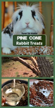 Pine cone rabbit treats are a great way to provide stimulation and a healthy chew toy for your bunny.