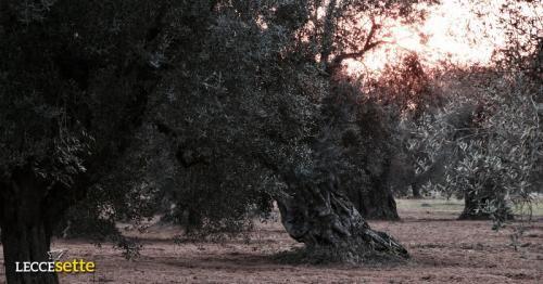 Puglia: #Sfregiavano #ulivi nella #riserva naturale per farne legna: due denunciati (link: http://ift.tt/2iPSNAi )