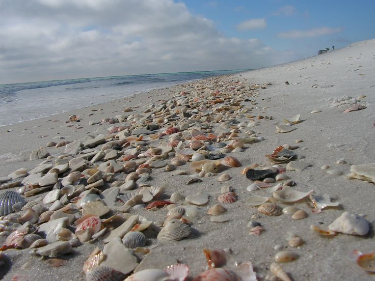 Seashell collection someone discovered on Navarre Beach.  I hope we find shells like this in June!