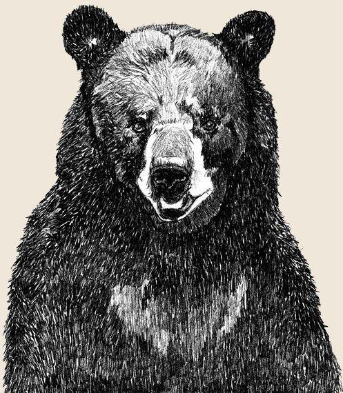 Black Bear Art   Great Big Bear Illustration by corelladesign