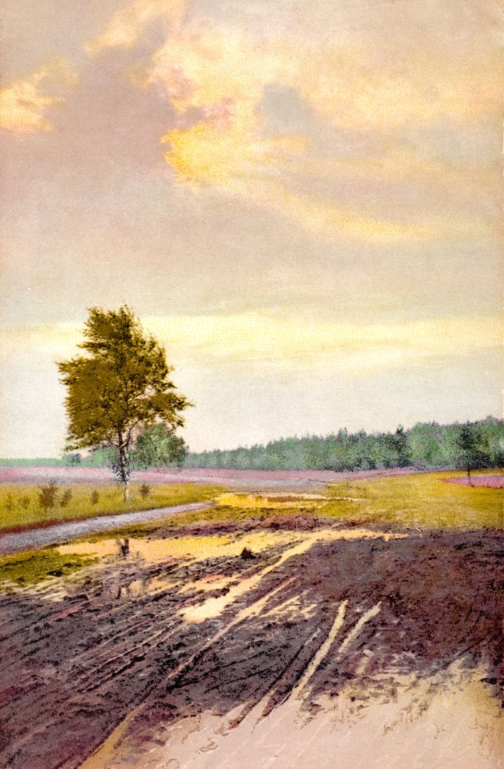 1913: Heidelandschaft - Die Postkarte lief am 09.07.1913 von Zehlendorf (Wannseebahn) nach Lichtenberg bei Berlin.