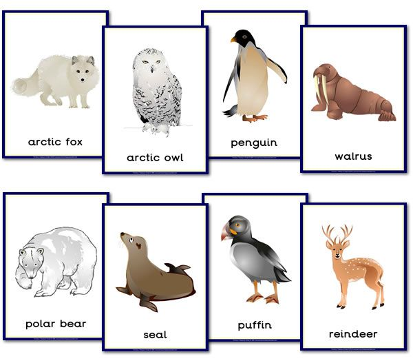 Printable letter-sized posters of polar animals
