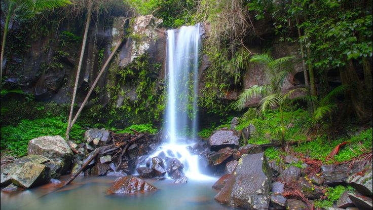 Mt Tamborine. Gold Coast National Parks. Queensland, Australia. Highlights and best places to camp in your campervan.