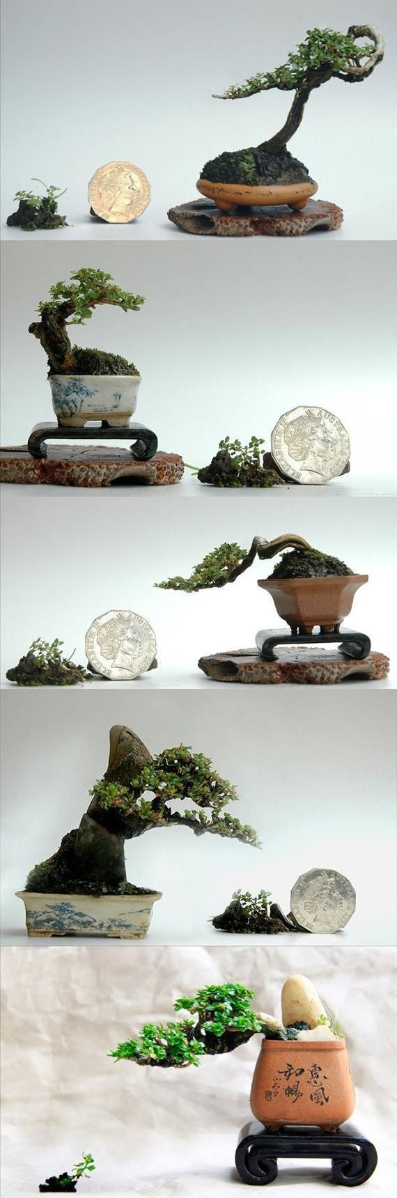 1000 Images About Bonsai Art On Pinterest