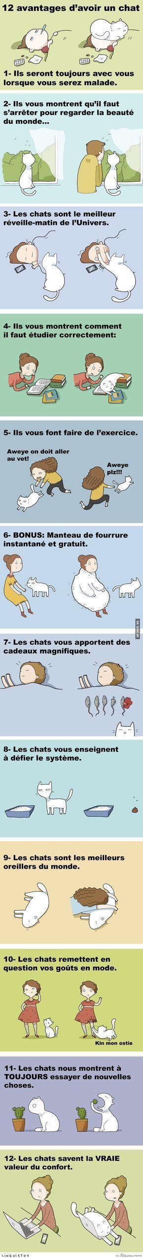 12 Avantages d'avoir un Chat – Québec Meme +