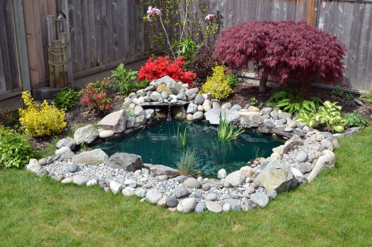 A small backyard pond surrounded by stones and ornamental plants.