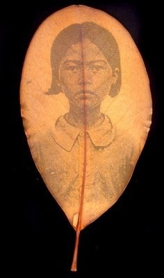 Binh Danh/ photos on leaves