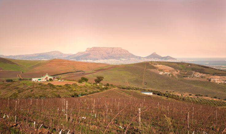 Our gorgeous view of Table Mountain #TableMountain #HillcrestEstate