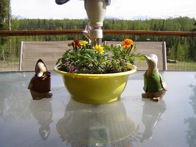 Patio Table Umbrella Planter Kitchen And Living Space Interior