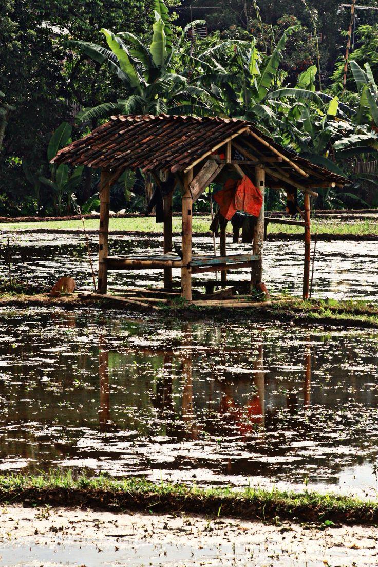 #farmer#field#indonesia