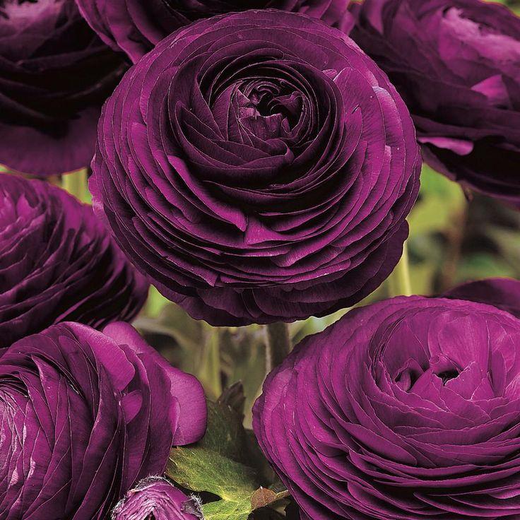 Дизайн зала в фиолетовых тонах фото вашему вниманию