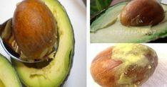 Το κουκούτσι αβοκάντο είναι μια υπερτροφή γεμάτη θρεπτικά συστατικά που μπορούν να προσφέρουν πολλά οφέλη στη συνολική υγεία του σώματος. Στην πραγματικότη