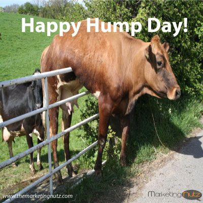 Best 25 happy hump day meme ideas on pinterest hump day - Funny pictures farm animals ...